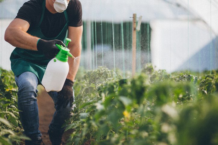 Farmer spraying plants in greenhouse
